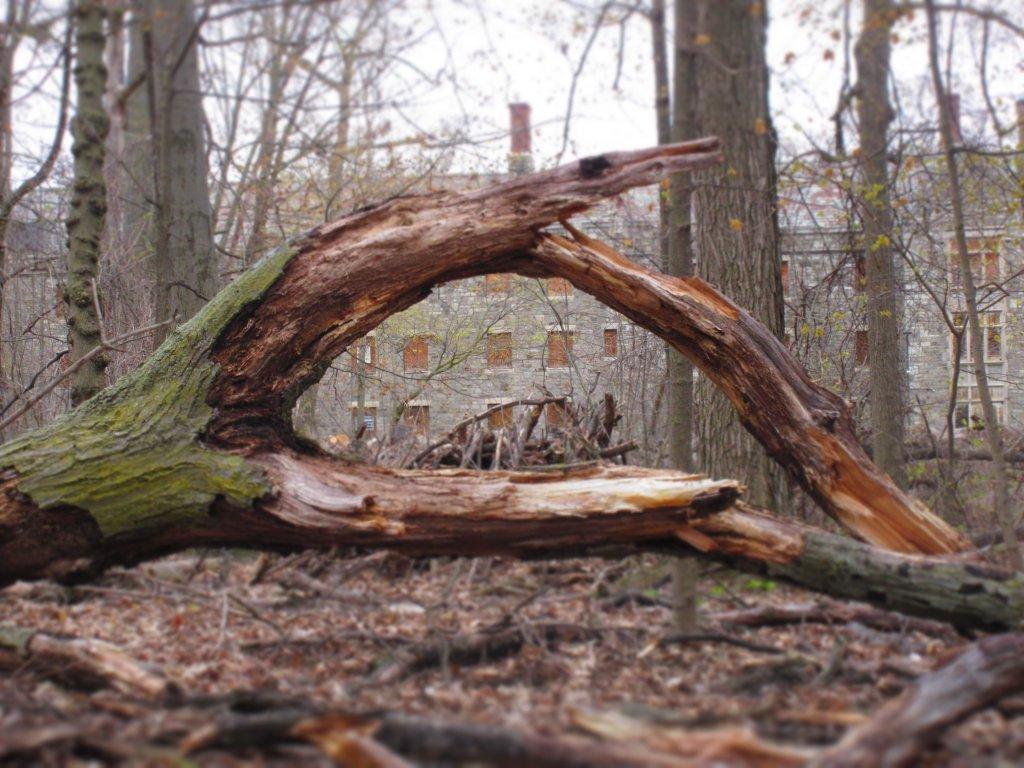 Fallen tree frames Schoellkopf Hall in the distance. Deveaux Woods State Park.